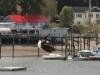 Boston Harbor Marina Docks at low tide