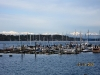 Boston Harbor Marina with Olympic Mountains Background