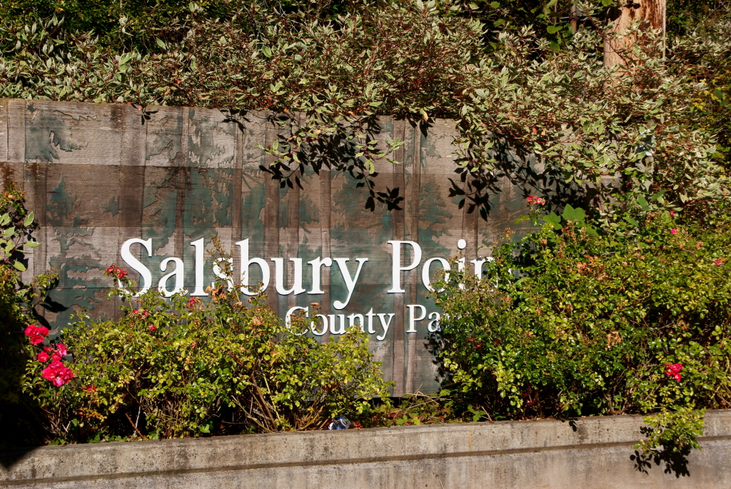 Welcome to Salsbury Park