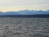 Near sunset view from Lofall of the Olympic Mountains & Hood Canal in Winter