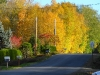 Beautiful view of Fall Maples in Edgewatrer Estates
