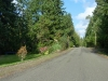 View of Seminole Road in Indian Hills Estates, Poulsbo